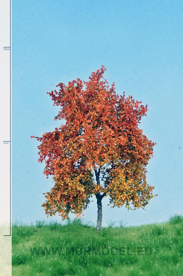 buche herbst 610 cm  herbstwinter  bäume