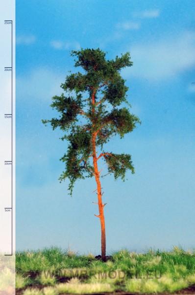 Waldkiefer 18-22 cm