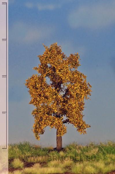 Eiche (Herbst) 12-16 cm