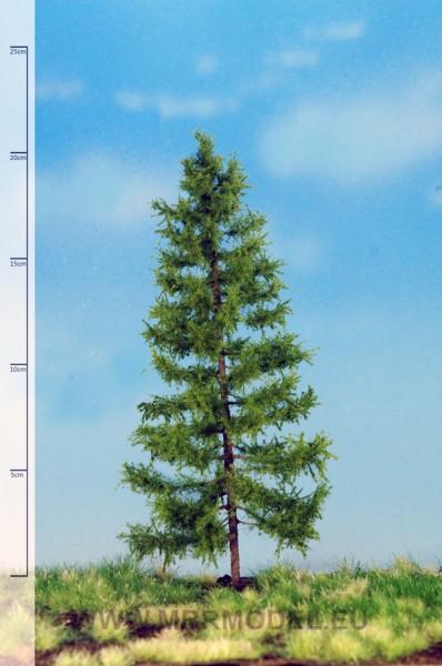 Europäische Lärche 30-40 cm