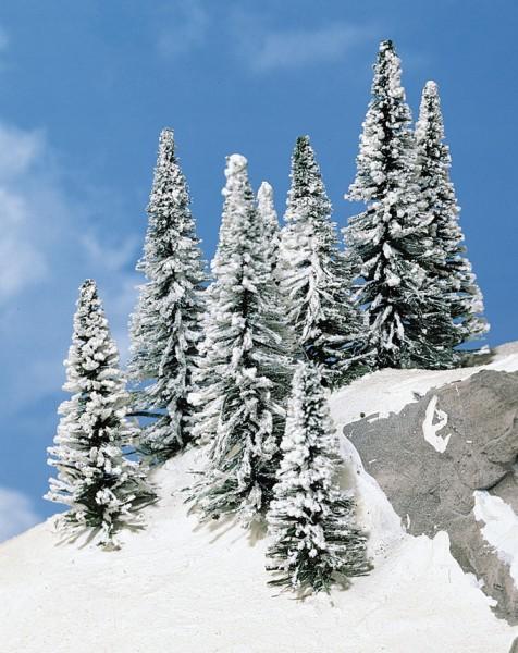 8 Schneetannen 9-12 cm